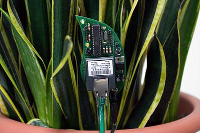 plant_twitter